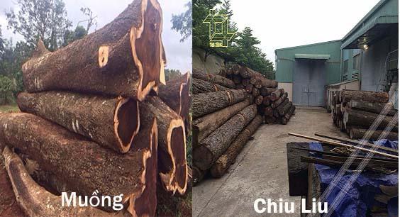 gỗ chiu liu và muồng đen rất khác nhau