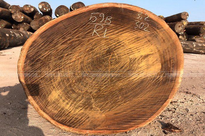 Thớ thịt Cây gỗ lim rất đanh chắc