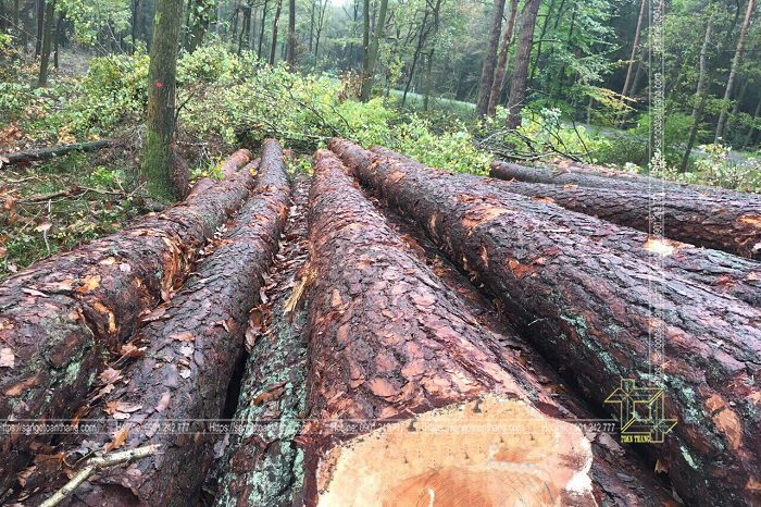 Gỗ tự nhiên ở Việt Nam hiện tại rất dạng chủng loại theo bảng phân loại nhóm gỗ